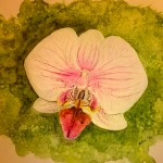Aquarel orchidee